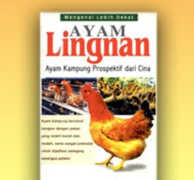 ayam lingnam