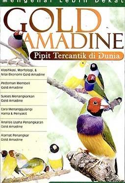 gold-amadine