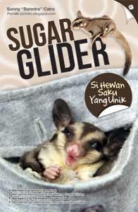 Sugar_Glider__Si_5110b40ab30ef