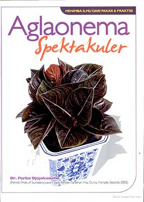 aglaonema-spektakuler