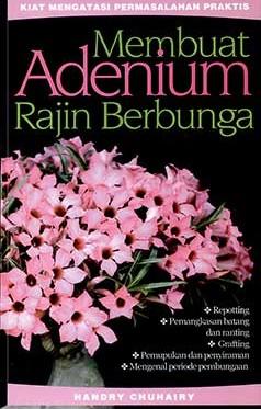 membuat-adenium-rajin-berbunga