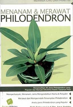 menanam-&-merawat-philodendron