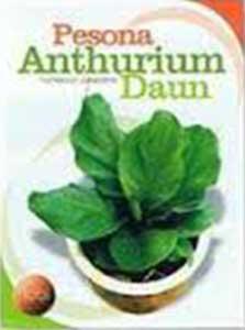 pesona-anthurium-daun