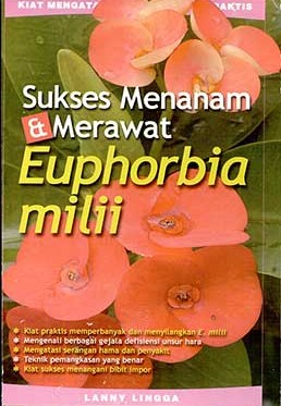 sukses-menanam-&-merawat-euphorbia-milii