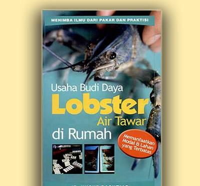 usaha budi daya lobster di rumah