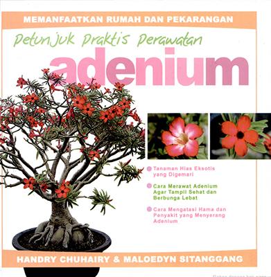 petunjuk-praktis-perawatan-adenium