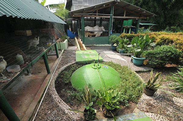 sistem pertanian terintegrasi biogas