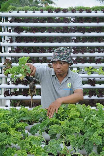 Charlie Tjendapati, seorang praktisi pertanian organik