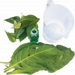 Basmi Hama Belalang dan Ulat dengan Pestisida Nabati