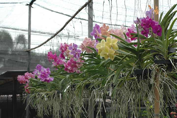 bunga anggrek di kebun