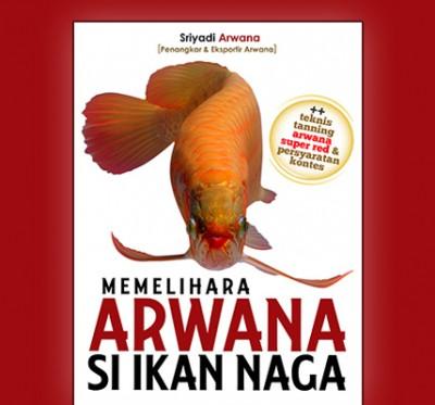 memelihara-arwana-si-ikan-naga