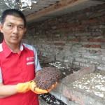 abdul azis pengusaha cacing tanah