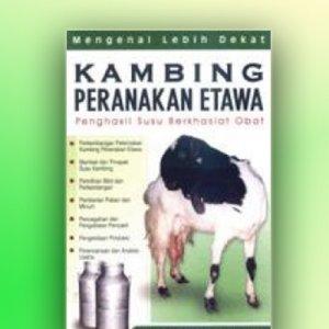 kambing peternakan etawa