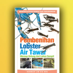 pembenihan lobster