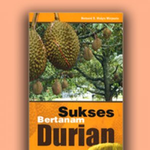 sukses bertanam durian
