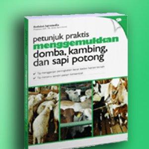 menggemukkan domba, kambing & sapi potong