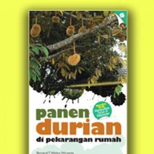 panen durian di pekarangan rumah