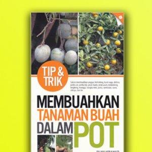 tanaman buah dalam pot