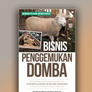 bisnis penggemukkan domba