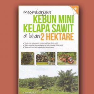 kebun mini kelapa sawit di lahan 2 hektare