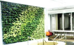 jenis-tanaman-vertikal-garden-1