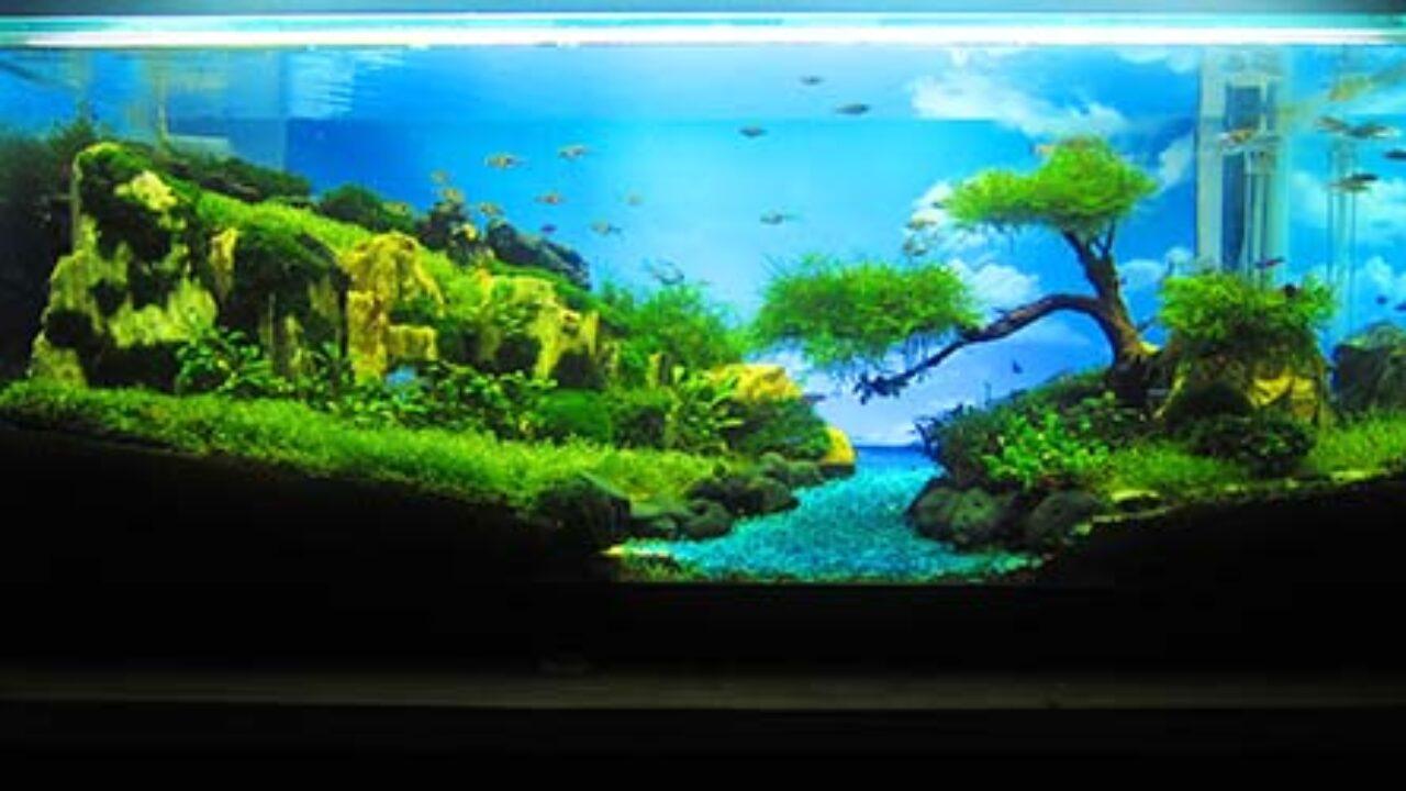 Agromedia Rancangan Aquascape Para Pemenang A2oc Agromedia