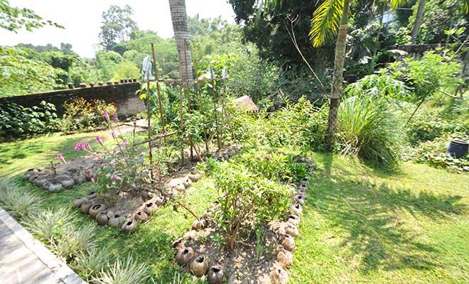Agromedia 4 Tip Bertanam Di Halaman Rumah Agromedia