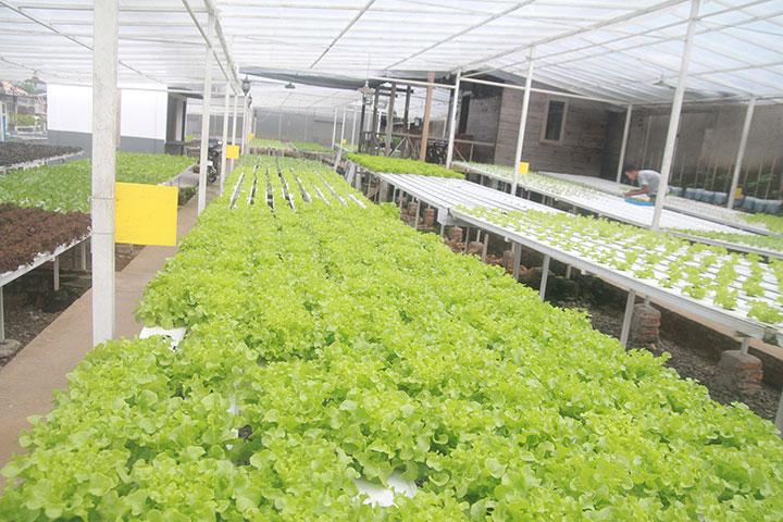 Agromedia Belajar Bisnis Hidroponik Dari Roni Kebun Sayur