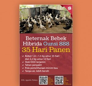 beternak-bebek-hibrida-gunsi-888-35-hari-panen-rev