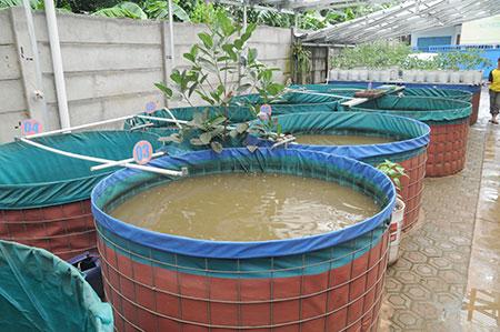 kolam_bulat_budidaya_lele