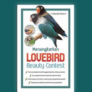menangkarkan lovebird beauty contest