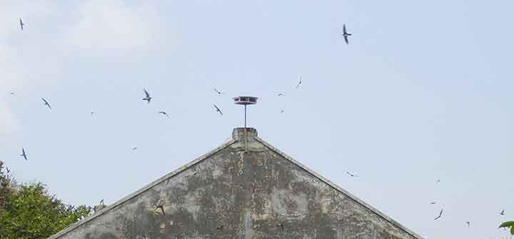 tweeter suara walet di atap