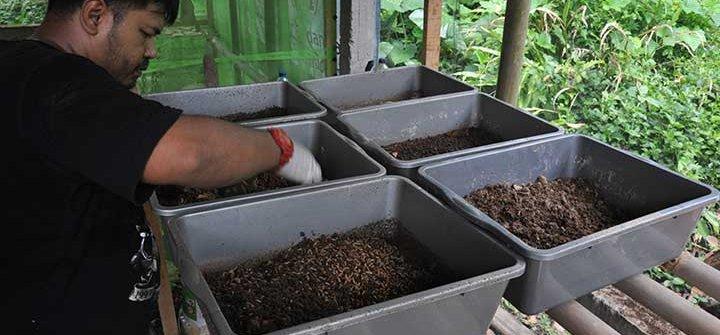 tim bsf indonesia raya budi daya maggot