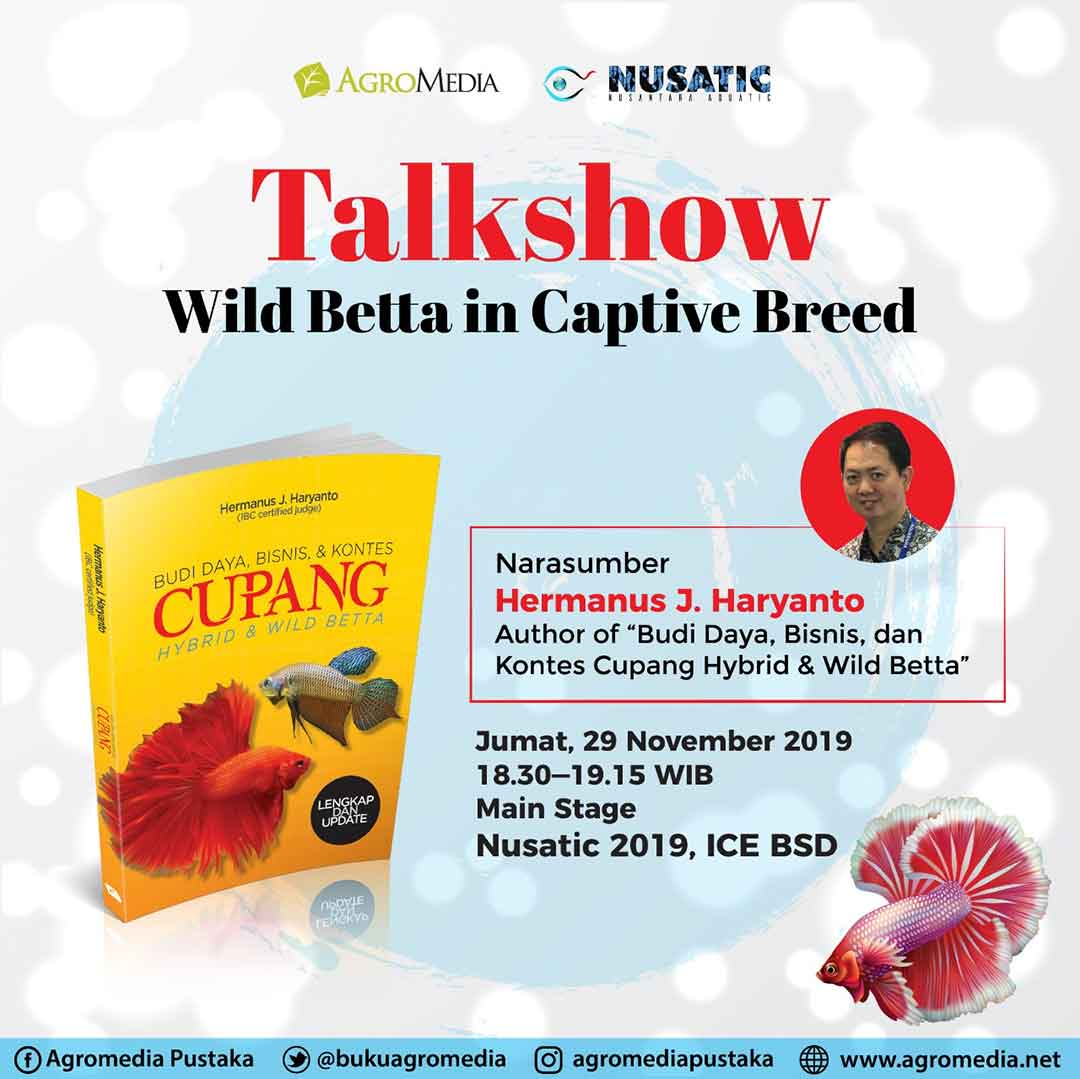 Talkshow Wild Betta In Captive Breed di Nusatic