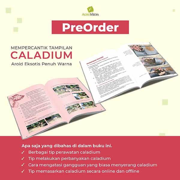 po buku caladium