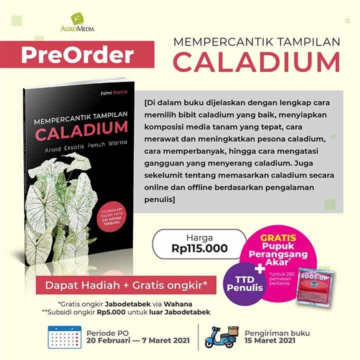 PO buku Tampilan Caladium