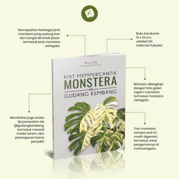 info grafis Kiat Mempercantik Monstera ala Gudang Kembang